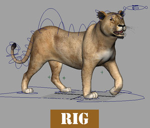 lioness modeled rigged 3d max