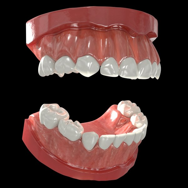 3ds human primary teeth gums