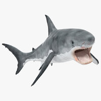 3d great white shark 2