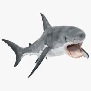 3d great white shark 2