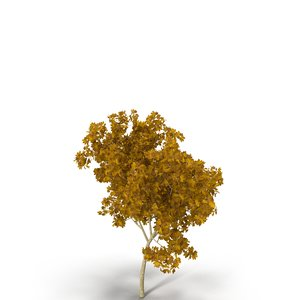 broadleaf maple young yellow 3d model