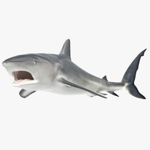 max caribbean reef shark rigged