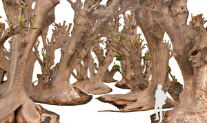 3d scan forest