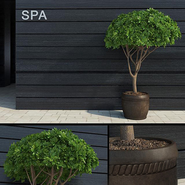 3d modern decorative tree 2 model