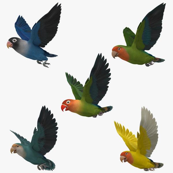 lovebirds animation agapornis 3d obj
