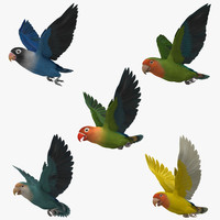 lovebirds animation agapornis 3d obj