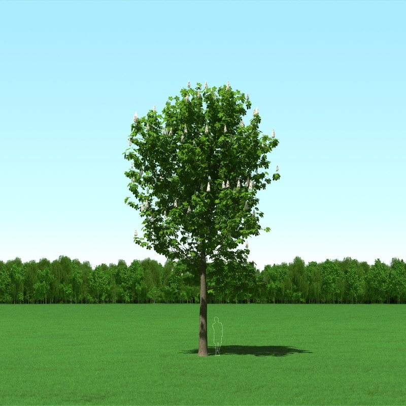 3ds max blooming tree castanea