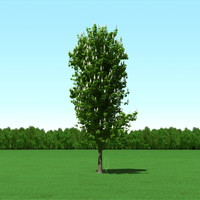 trees modelling 3d max