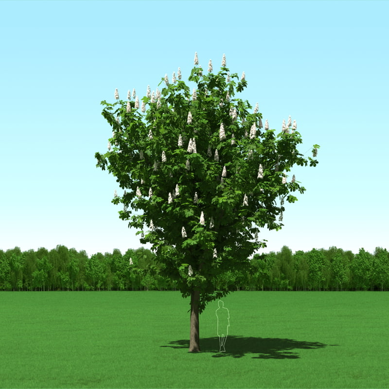 trees modelling max free
