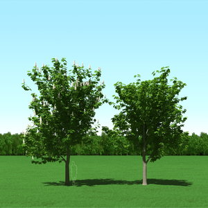 trees modelling max