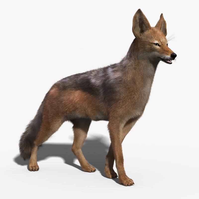 3d jackal fur rigged