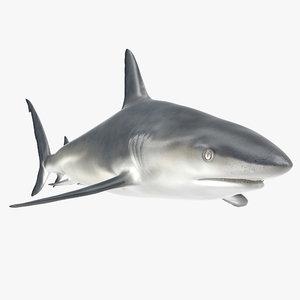 3d x caribbean reef shark