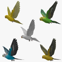 3d model animation budgerigar