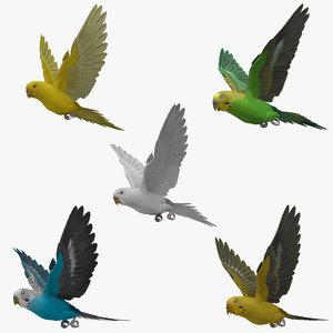3d model animation budgerigar
