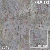 2048 Seamless Bark Texture VIII