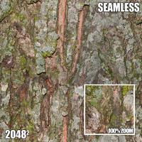 2048 Seamless Bark Texture V