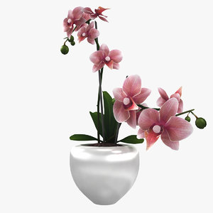 contemporary flower 3d max