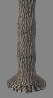 tall oak tree trunk 3d 3ds