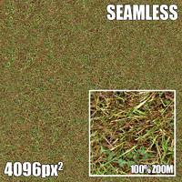 4096 Seamless Texture Grass I
