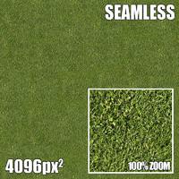 4096 Seamless Texture Grass III