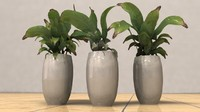 luxury pots with plants