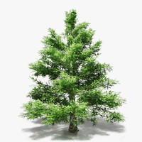 3d spruce pine trees