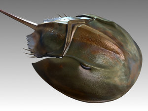 3d model limulus alaskan king