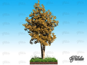 obj birch grass