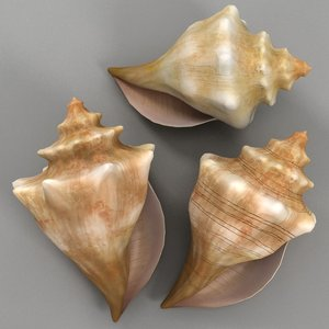 conch shell 3d model