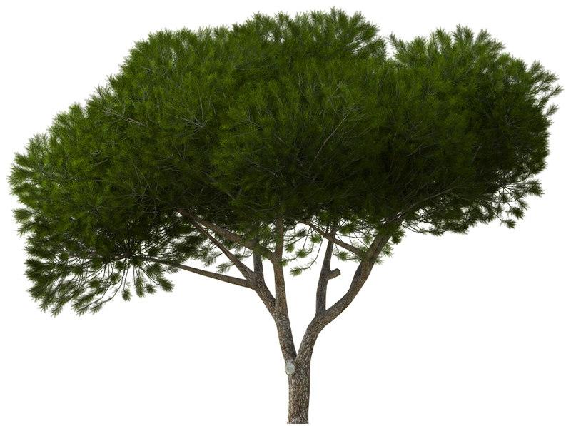 3d pine mediterranean manso