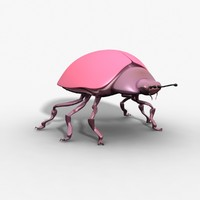 Rigged Beetle
