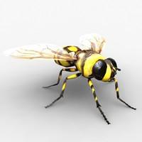 3d fly model