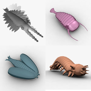 3d ma animals cambrian