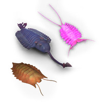 3d rigged animals cambrian