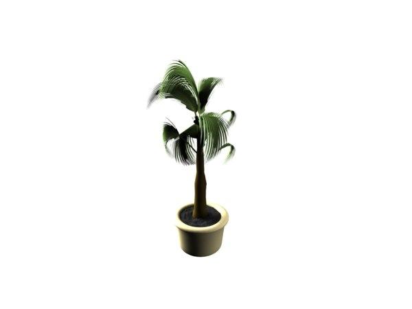 free max mode pot palm