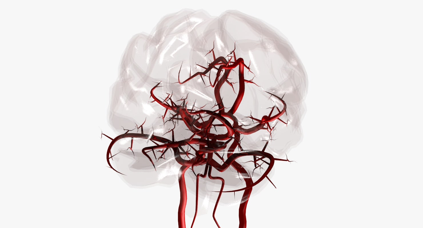 3ds max arteries brain circle willis