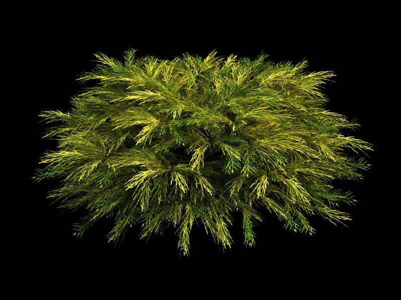 3d model juniper plantings