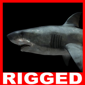 3d shark rigged