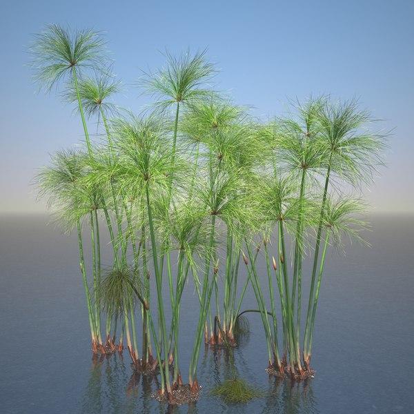 3d cyperus papyrus plant set model