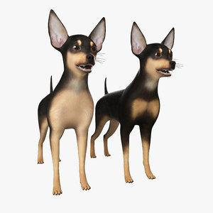 max miniature pinscher dog