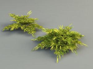 juniper plantings 3d model