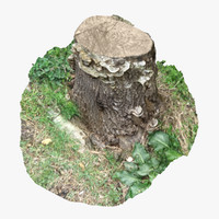 tree stump 17 3d model