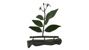 3d model plants woody mistletoe
