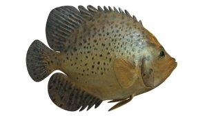 fish animals 3d model