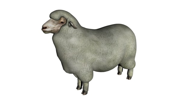merino sheep 3d model