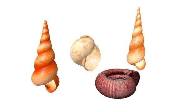3d model molluscs mollusks animals