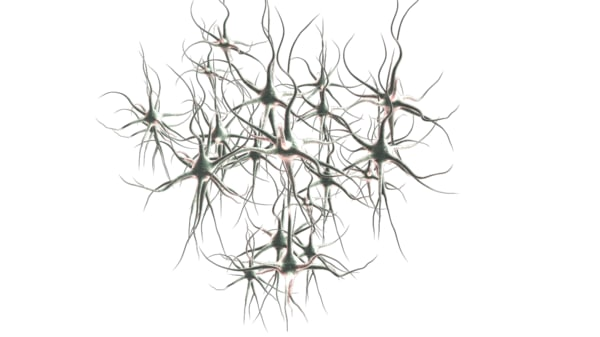 neuron cell 3d model