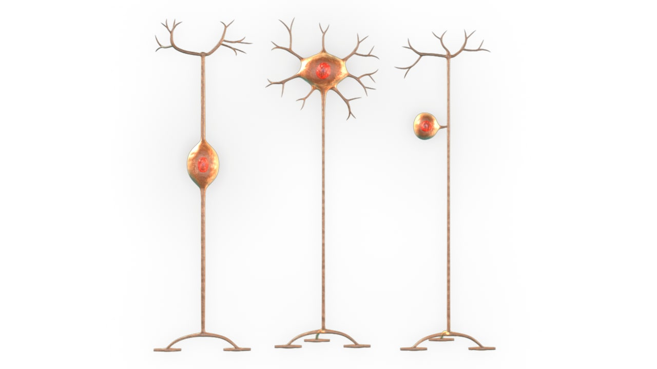 neurons cell synapses 3d model