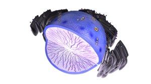3d nucleolus nucleus