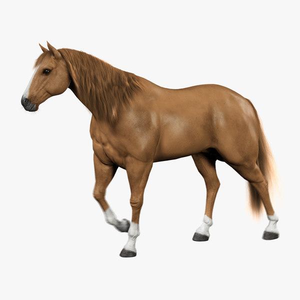 horse light brown fur 3d model